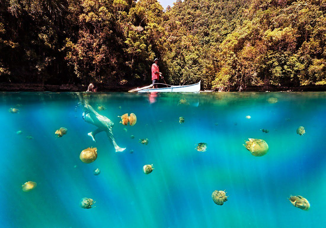 Jellyfish Found In This Island Are 'Stingless'! The Nature Proves again that it Doesn't Abide any Law!