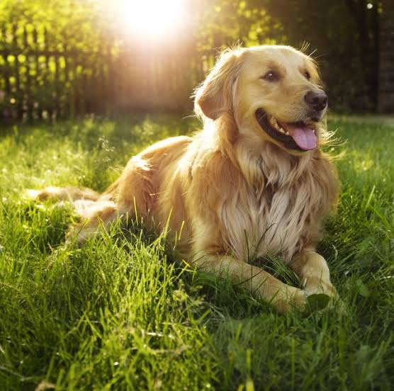 The Latest Coronavirus Comes From Dogs, Is It true?