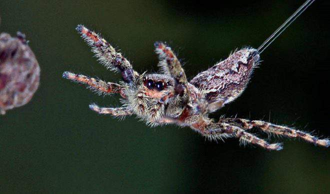 Fact Check: Is flying spiders Real? Dangerous to Humans?