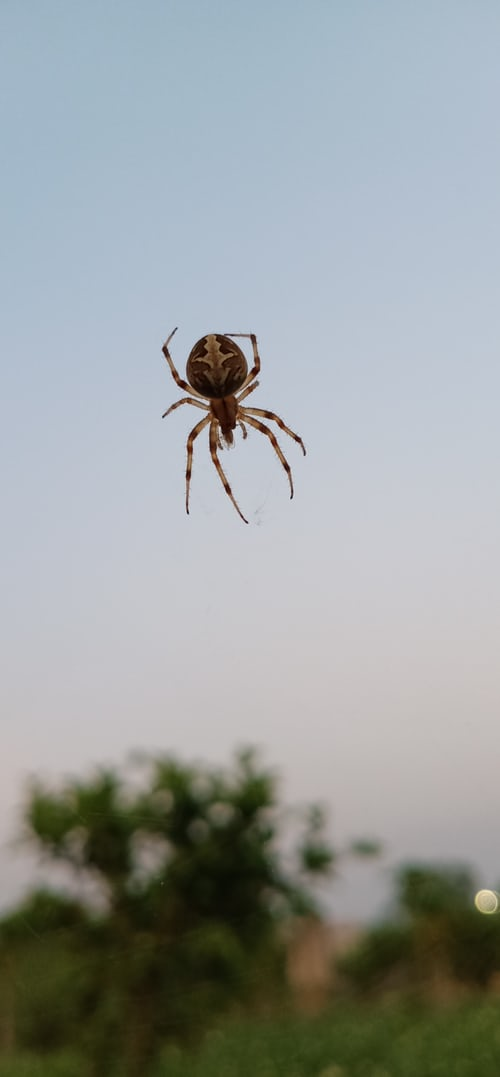 Is Flying Spiders Dangerous? Fact Check - Everything You Want To Know