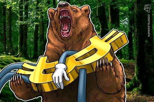 Will Bear coin reach $1
